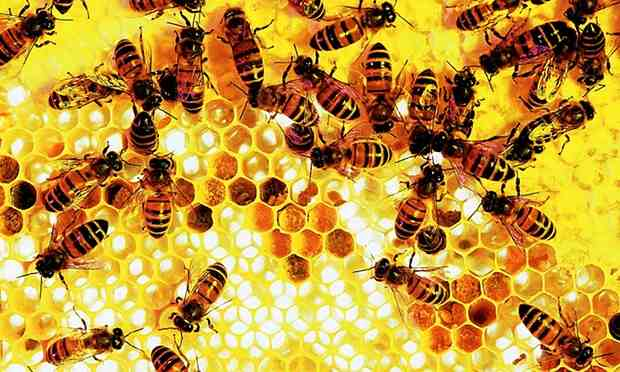 Bees-on-a-honeycomb–014 (1)-compressed